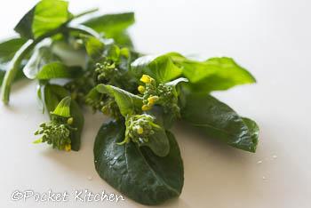 小松菜の花-1